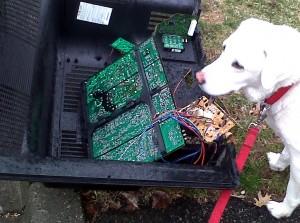 dog-ate-computer